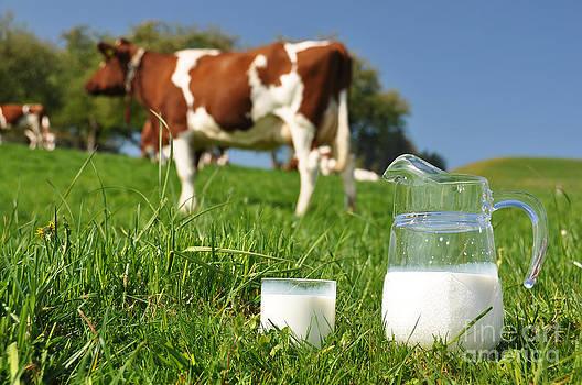 Jug of milk against herd of cows by Alexander Chaikin
