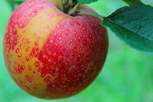 Juicy Apple by Shaileen Landsberg