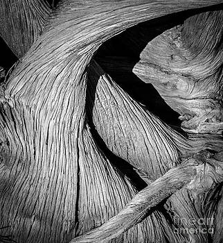 Juniper by Sherry Davis