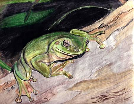 Just a Frog by Josh Mayfield