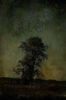 Emily Stauring - Just A Tree