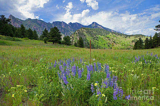 Just Another Day in Colorado by Barbara Schultheis