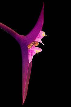Zoran Buletic - Just Flower