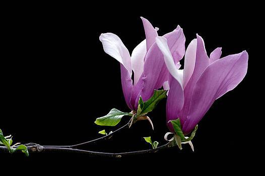 Zoran Buletic - Just Flowers II