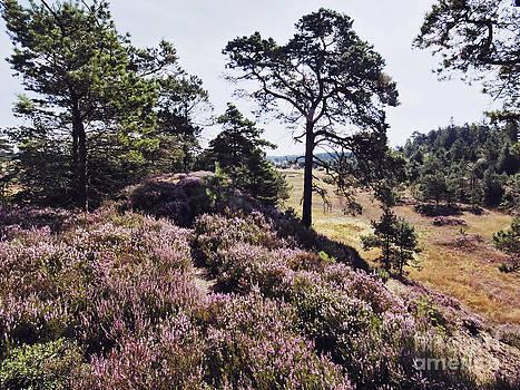 Jutlandic Landscape by Wedigo Ferchland