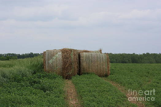 Kansas Round Haybales in a Alfalfa field with blue sky by Robert D  Brozek