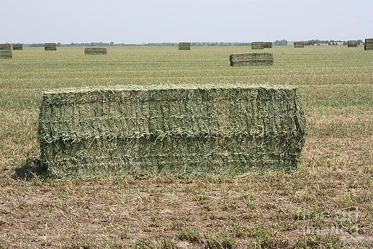 Kansas Square Alfalfa Bale in a field by Robert D  Brozek
