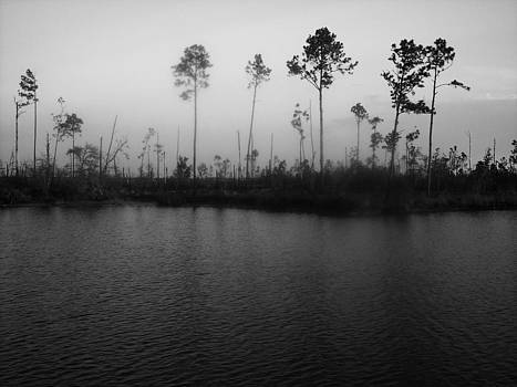 Katrina's trees Jourdan River by Suzanne E Clark