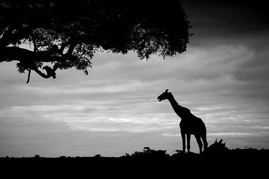Mauverneen Blevins - Kenyan Silhouette