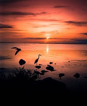 Key Largo Dreams by Elaine Snyder