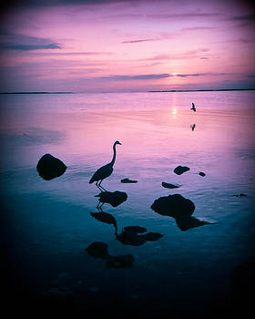 Key Largo Purple Sunset by Elaine Snyder