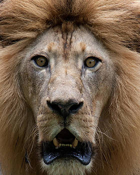 King of the Jungle by Darren Strubhar