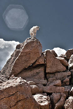 King of the Mountain by Tejas Prints