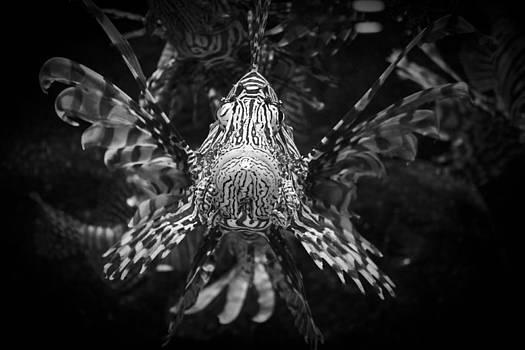 King of the Ocean 2 by Jamie Brogdon
