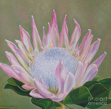 King Protea by Pera  Schillings