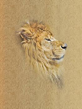 Kingdom Watch by Robin Hewitt