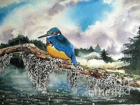 Kingfisher by Stephanie Zobrist