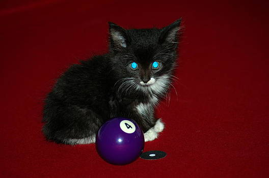 Ronald T Williams - Kitten Behind The 4 Ball