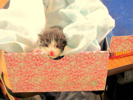 Kitten in a Box by Amy Bradley