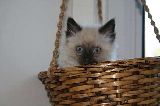 Kitten in Basket by Diana Poe