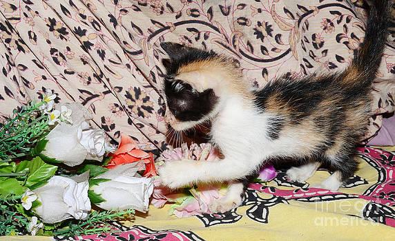 Kitten by Jiss Joseph