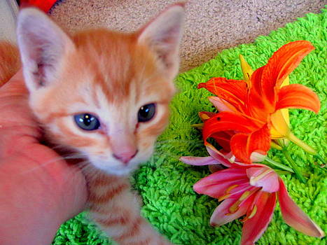 Kitten with Tigerlilies by Amy Bradley