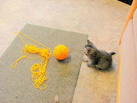 Kitten with Yarn by Amy Bradley