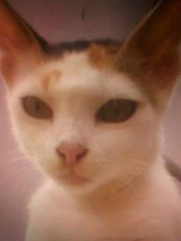 Kitty by Amisha Tripathy