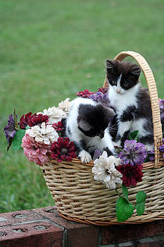 Kitty Basket by Lisa Stanley