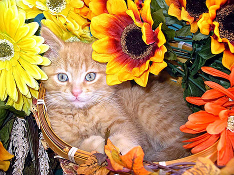 Chantal PhotoPix - Kitty Cat Lost in Thought - Cute Kitten with Blue Eyes relaxing in a Flower Basket - Fall Season