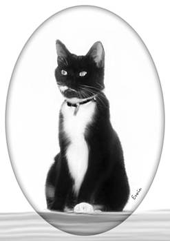 Kitty by Erwin Verhoeven
