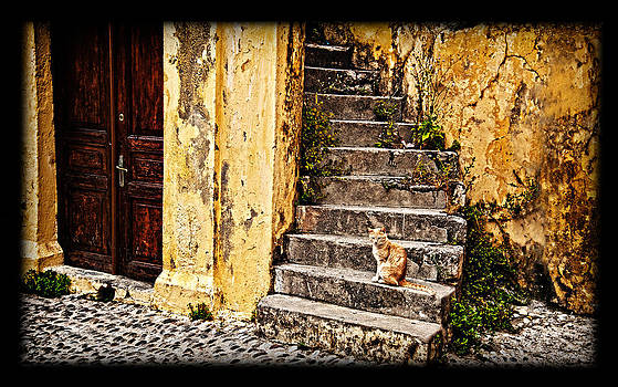 Kitty on steps 2 by Thomas Kessler