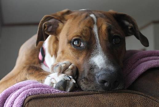 Rebecca Frank - Kitty pup