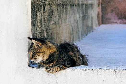 Zoran Buletic - Kitty