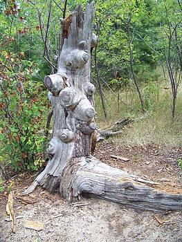 Knobby Tree Stump by Jennifer  King
