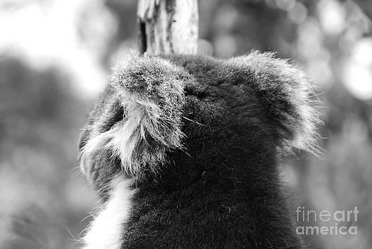Koala by Camilla Brattemark