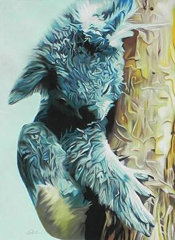 Koala by Paul Miners