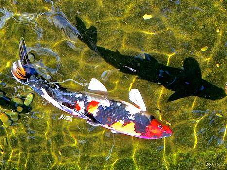 Koi with Shadow by Brian D Meredith