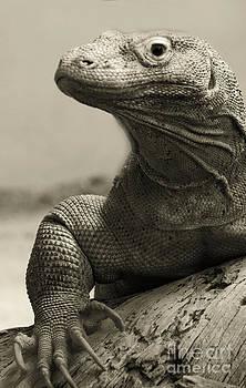 Heather Applegate - Komodo Dragon