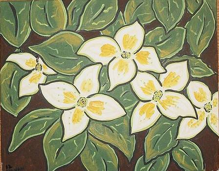 Kousa Dogwood by Debbie Talman