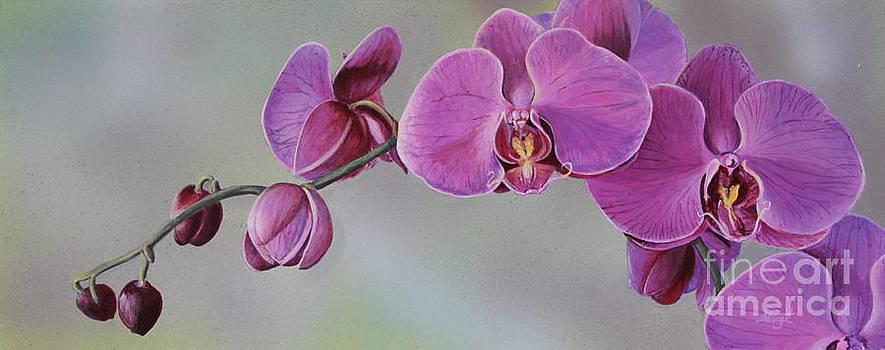 Kristin's orchid  by Margit Sampogna