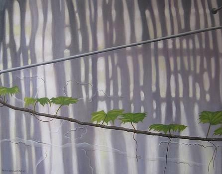 La Fayette by Pera  Schillings