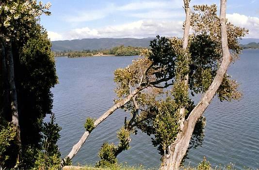 La Isla Mancera - Valdivia by Ronald Osborne
