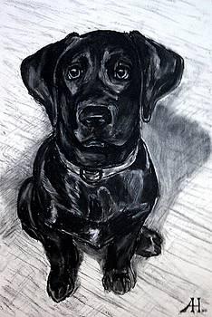 Andrew Hench - Lab Puppy