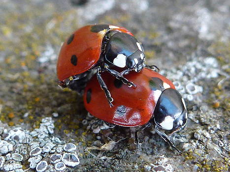 Lady Birds In Love by Dean Chappell