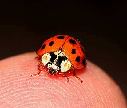 Lady Bug 1 by Robert Morin