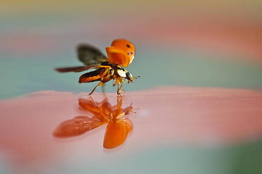 Christine Kapler - Lady bug flying away...