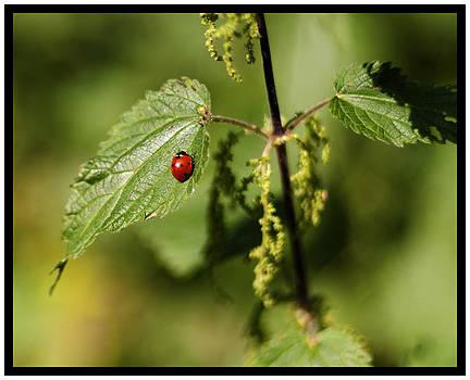 Lady on a Leaf by Sherry Fain