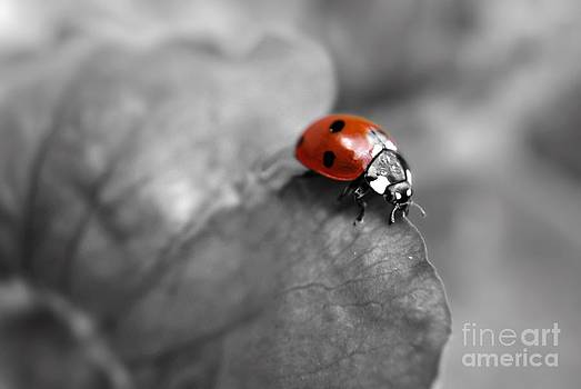 Yhun Suarez - Ladybird On Leaf 2.0