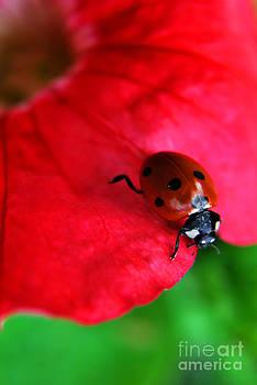 Yhun Suarez - Ladybird On Petal